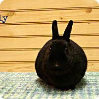 Dwarf Mix for adoption in West Des Moines, Iowa - Lilly
