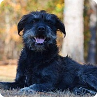 Adopt A Pet :: Jack Sparrow - ON HOLD - NO MORE APPLICATIONS - Baltimore, MD