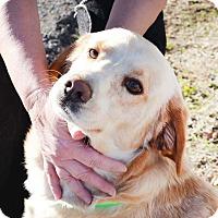 Adopt A Pet :: Bode - Union City, TN