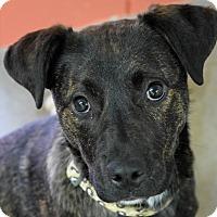 Adopt A Pet :: Libby - Pontiac, MI