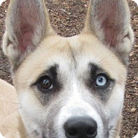 Adopt A Pet :: Ringo - Port Jervis, NY