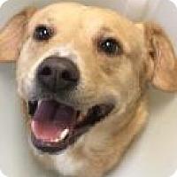 Adopt A Pet :: Jager 6165 - Columbus, GA
