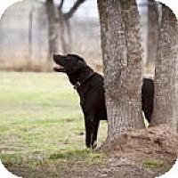 Adopt A Pet :: Razz - Katy, TX