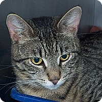 Adopt A Pet :: scott - El Cajon, CA