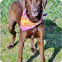 Adopt A Pet :: TAYA - Malibu, CA