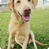 Adopt A Pet :: Sable - Lewisville, IN