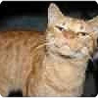Adopt A Pet :: T. J. - Lake Ronkonkoma, NY