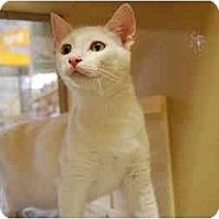 Adopt A Pet :: Casper - Modesto, CA