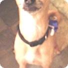 Adopt A Pet :: Aldo