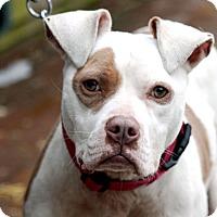 Adopt A Pet :: Pandora - Tinton Falls, NJ