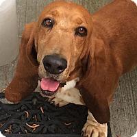 Adopt A Pet :: Monroe - Columbia, SC
