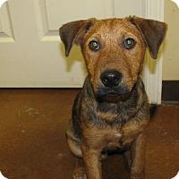 Adopt A Pet :: Wrigley - Charlemont, MA