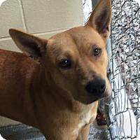 Adopt A Pet :: Cupcake - Manhasset, NY