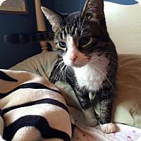 Adopt A Pet :: Comet - Toronto, ON