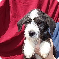 Adopt A Pet :: Arden - Oviedo, FL