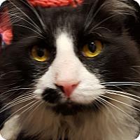 Adopt A Pet :: Whiskey - Trevose, PA