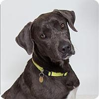 Adopt A Pet :: Wayne - San Luis Obispo, CA