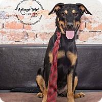 Adopt A Pet :: Hardy - Apache Junction, AZ