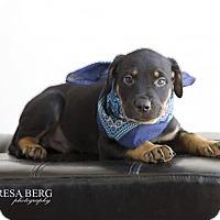 Adopt A Pet :: Caleb - White Hall, AR