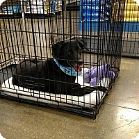 Adopt A Pet :: Coco - Liberty, MO