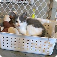 Adopt A Pet :: Joliet Jake - Geneseo, IL