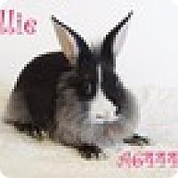 Adopt A Pet :: Allie - Paramount, CA