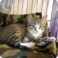 Adopt A Pet :: Joshi - Tampa, FL