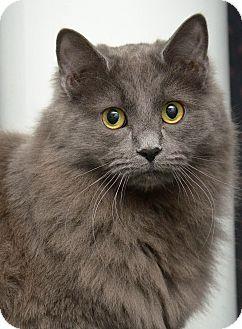Cat Adoption Sterling Va