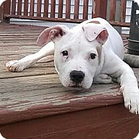 Adopt A Pet :: Maisie - Rochester, NY