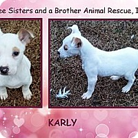 Adopt A Pet :: KARLY - Dallas, NC