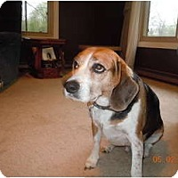 Adopt A Pet :: Deuce - Courtesy - Indianapolis, IN
