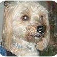 Adopt A Pet :: Brando - Rigaud, QC