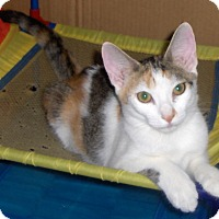 Adopt A Pet :: Joy - Richmond, VA