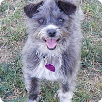 Adopt A Pet :: YVETTE - Mission Viejo, CA
