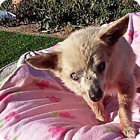Adopt A Pet :: MJCub - Creston, CA
