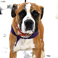 Adopt A Pet :: Bill- Adopted! - Detroit, MI
