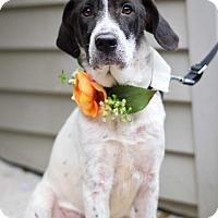 Adopt A Pet :: Talini - Baton Rouge, LA