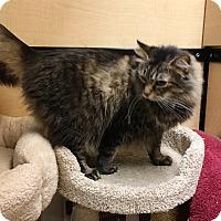 Adopt A Pet :: Nikki - Riverside, CA