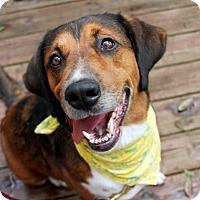 Adopt A Pet :: Maybell - Odessa, FL