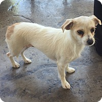 Adopt A Pet :: Ruby formerly Alice - Las Vegas, NV