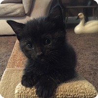 Adopt A Pet :: Harley - Warren, OH