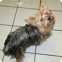 Adopt A Pet :: Candy - San Diego, CA