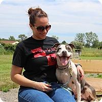 Adopt A Pet :: Xina - Elyria, OH