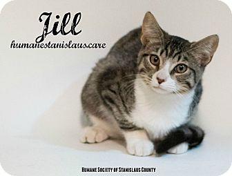 Domestic Shorthair Kitten for adoption in Modesto, California - Jill