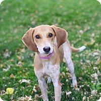 Hound (Unknown Type) Puppy for adoption in Salt Lake City, Utah - Gertrude Bell