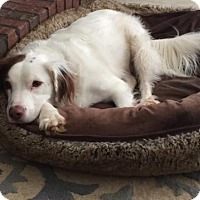 Adopt A Pet :: Chip - Atlanta, GA