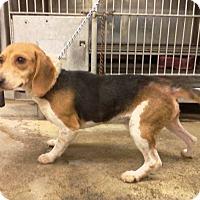 Adopt A Pet :: Bob - Upper Sandusky, OH