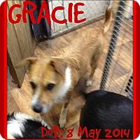 Adopt A Pet :: GRACIE - Mount Royal, QC