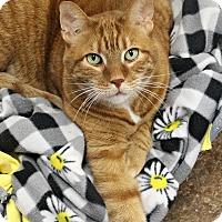 Adopt A Pet :: Tigger - Dunkirk, NY