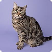 Adopt A Pet :: Tarzan - Wilmington, DE